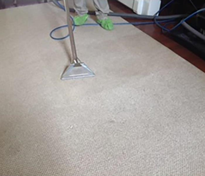Mold Remediation Carpet Cleaning Services